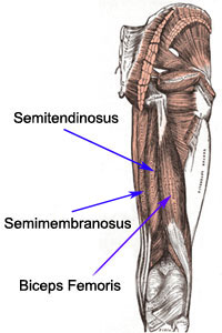Hamstring Strain - Physical Therapy Guide to Evaluation & Treatment